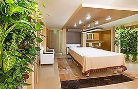 Профессиональное вертикальное озеленение растениями Вашего офиса и дома живая стена из растений lafasad